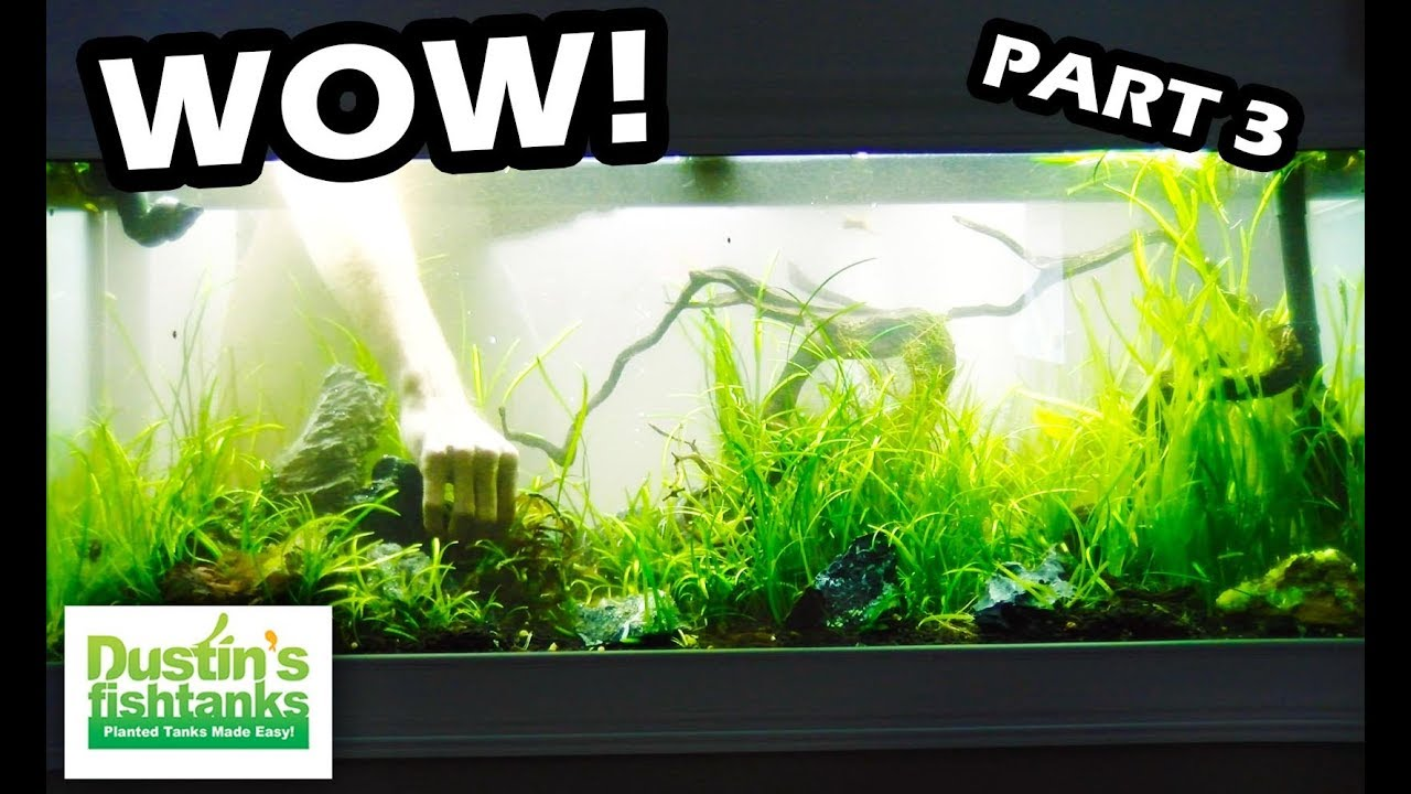 Planted Aquarium Setup Best In Wall Tank Adding New Plants And Seiryu Stone Part 3