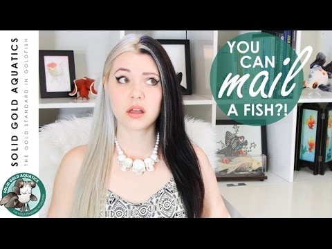 YOU CAN MAIL FISH?! // How Fish are Packaged for Shipping