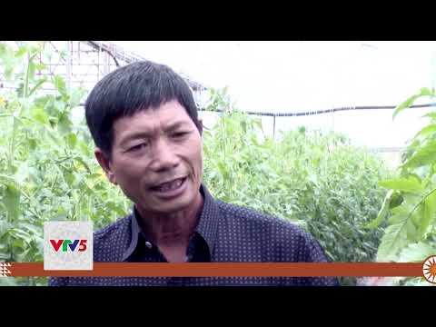 [TIẾNG CƠ HO] ỔN ĐỊNH ĐẦU RA KHI THAM GIA HTX SẢN XUẤT RAU AN TOÀN | VTV5
