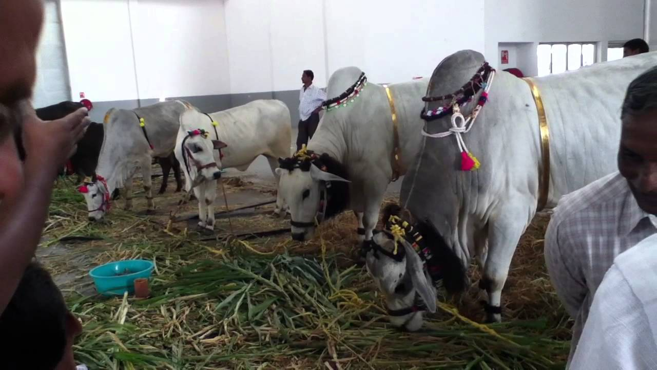 Indian Dairy Farm Exibition