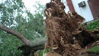 Hurrican Sandy Don