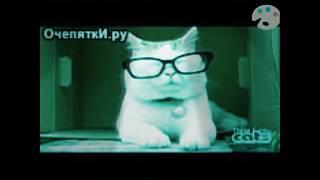 Смотреть Коты-юмористы(2 часть) онлайн