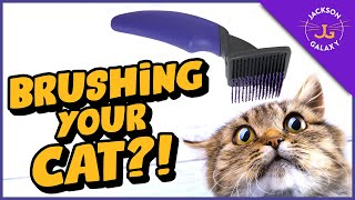 Top TIPS for Brushing Your Cat (even if they hate it)