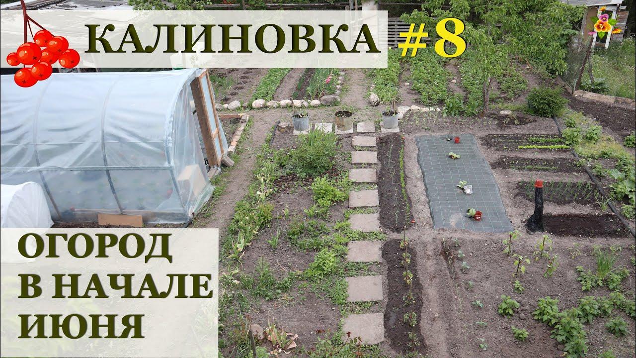 Огород в начале июня / КАЛИНОВКА