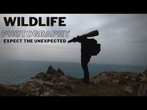 WILDLIFE PHOTOGRAPHY | Expect the Unexpected | Ravens or Peregrine Falcons