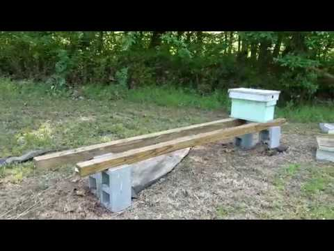 Flash Flood Wiped Out The Honey Bee Yard Must See