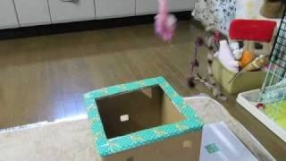 おかき びっくり箱 jack In The Box