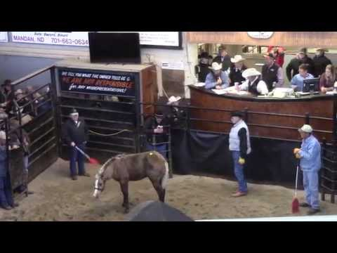 Logging Camp Ranch @ Hermanson Kist Horse Sale 10-3-2014