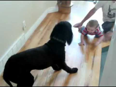 dog is afraid of baby youtube. Black Bedroom Furniture Sets. Home Design Ideas