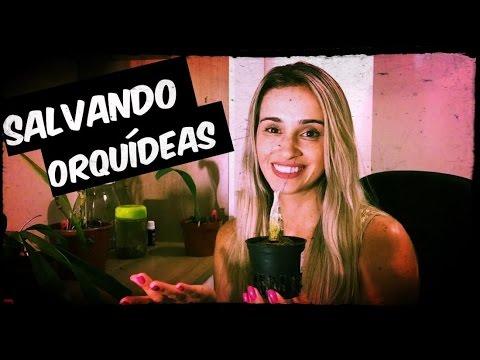 SALVANDO ORQUÍDEAS - RECUPERAÇÃO DE ORQUÍDEAS DEBILITADAS