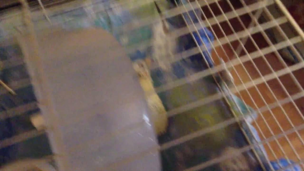 Мы содержим своих ежей в клетках ferplast casita80, просторно. Минимальная цена необходимого