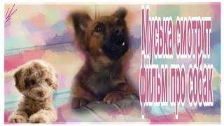 Муська смотрит фильм про собак