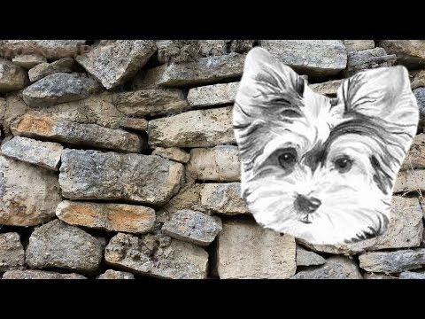 Кормление собаки с мочекаменной болезнью: 5 золотых правил