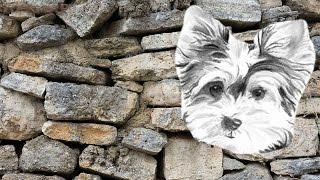 Мочекаменная болезнь у собак | Симптомы | Лечение.(Мочекаменная болезнь у собак довольно часто встречается, если их хозяин не очень то беспокоится о состояни..., 2016-01-07T09:02:18.000Z)