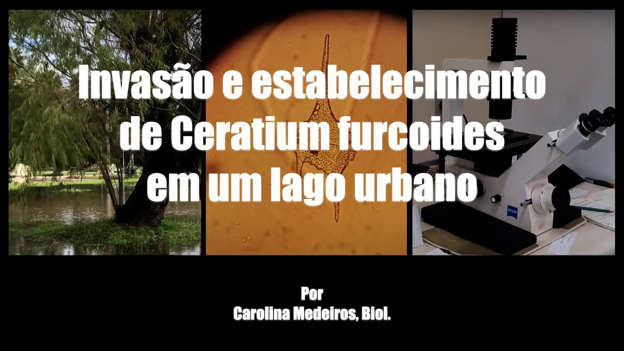 O que o Ceratium está fazendo em um lago urbano?