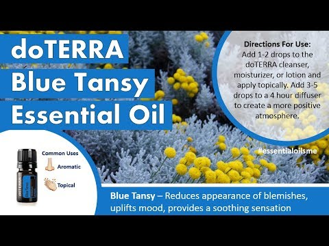 amazing-doterra-blue-tansy-essential-oil-benefits