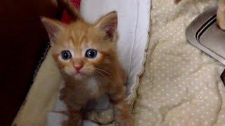 СМЕШНЫЕ КОТЫ Смешные собачки Шутки с котами - Прикольное видео (2019) МатроскинТВ