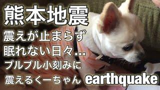熊本地震を体験したくーちゃん。 地震が来る前には決まってトイレに逃げ...