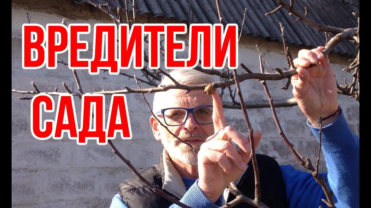 Топ вредителей моего сада / Инсектициды / Игорь Билевич