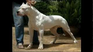 Top 10 strongest dogs in the world