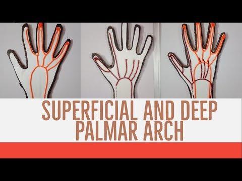 deep palmar space of hand - 480×360