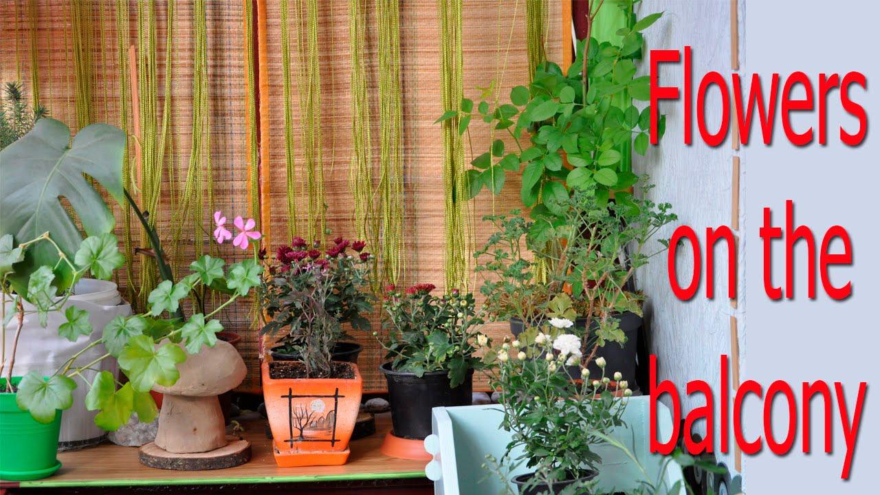 У нас вы можете купить орхидеи разных видов и другие горшечные растения.