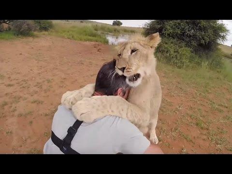 TOUGH LOVE | The Lion Whisperer