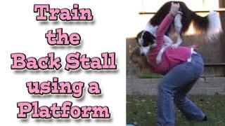 Train The Back Stall: Disc Dogging - Using A Platform