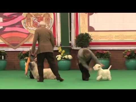 Birmingham National 2015 - Terrier Veteran Group