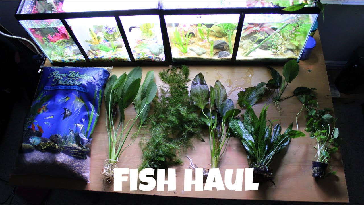Local fish store haul youtube for Local fish store