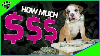 How Much Does It Cost To Take Care Of A Dog? You'll Be Surprised