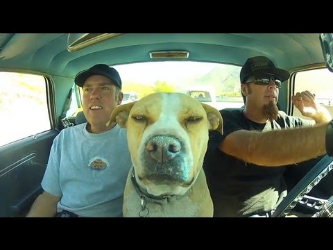 Thumbnail: Roadkill Show Q&A With Freiburger, Finnegan, and The Dog: October 2013