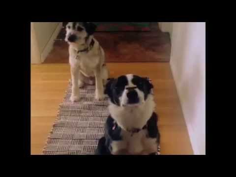 Double Dog Treat Trick
