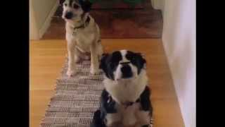 Double Dog Treat Trick