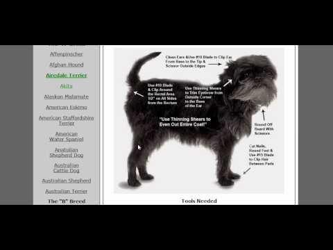 mydoggroomingguide com pet dog grooming class all breed dog rh youtube com dog grooming guide book pdf dog grooming guide pdf