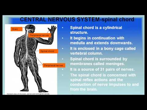 Central Nervous System - (Control and Coordination) CBSE Biology Class 10 Science