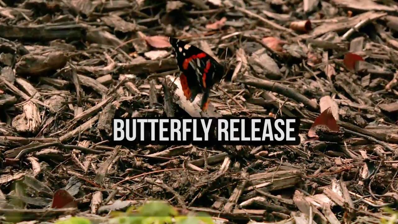 Erfly Work And Release 6 4 2016 Carters Nursery Jackson Tn