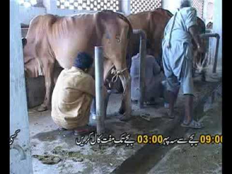 Dairy Farming  basic principles part-1 Dr.Ashraf Sahibzada