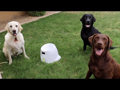 DOGS REACT TO BALL LAUNCHER!!