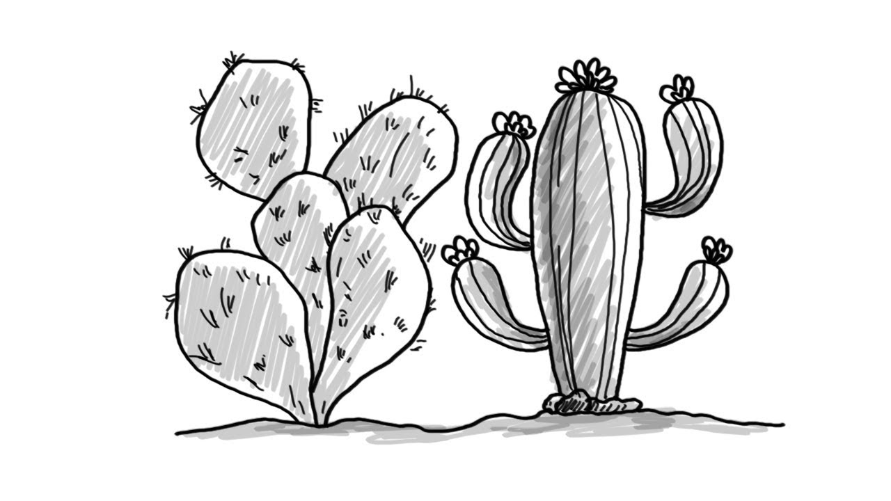 how to draw cactus plants easy drawing youtube. Black Bedroom Furniture Sets. Home Design Ideas