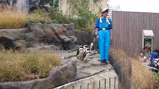 サンシャイン水族館 ペンギンフィーディングタイム thumbnail