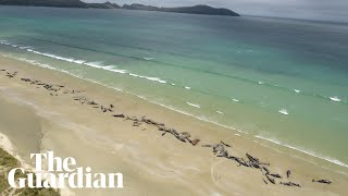 Over 140 whales die after becoming stranded on New Zealand beach