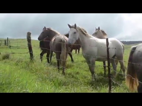 """Government UFO ACTIVITY """"RANCH FARMERS REACT"""" WHY NOW? Astounding UFO VIDEO 2016"""