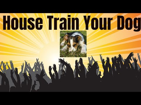 How to Use Crate Training to Housetrain Your Dog
