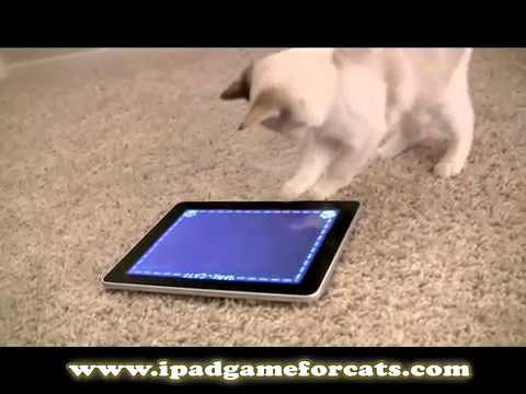 Gioco Per Gatti Su Ipad Youtube