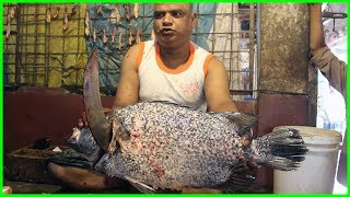 Huge Coral Fish Cutting into Pieces in the Fish Market | Big Fish Slicing by Local Fish Cutter