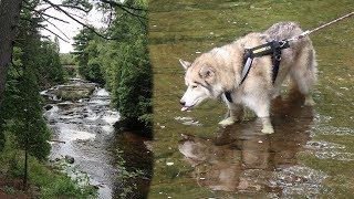 huskies-hike-falls-river-falls-camping-with-dogs