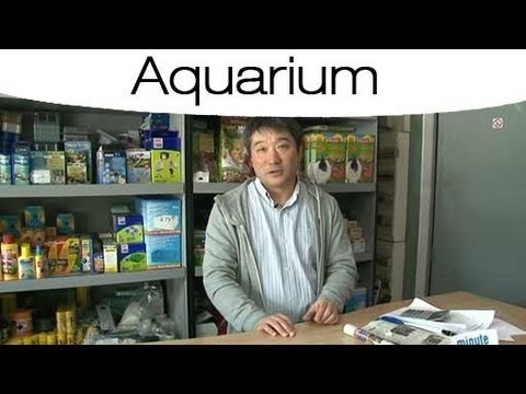 comment connaitre la temp rature id ale pour les poissons dans un aquarium youtube. Black Bedroom Furniture Sets. Home Design Ideas