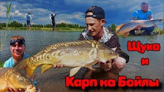 Рыбалка на Карпа Крупная щука клюнула на бойлы