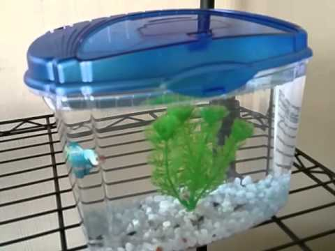 Aqueon betta bowl fish tank aquarium review youtube for Fish tank review